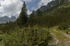 Sunlit гора перерастанная с coniferous лесом и glade на экологической прогулке к Maliovitza выступают в горе Rila Стоковые Фотографии RF