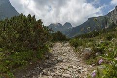 Sunlit гора перерастанная с coniferous лесом и glade на экологической прогулке к Maliovitza выступают в горе Rila Стоковая Фотография