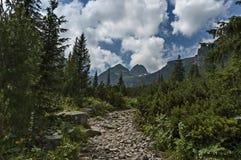 Sunlit гора перерастанная с coniferous лесом и glade на экологической прогулке к Maliovitza выступают в горе Rila Стоковые Фото