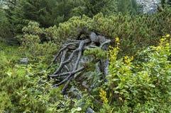 Sunlit гора перерастанная с coniferous сосной леса и дерева с интересной кроной на экологической прогулке к Maliovitza p Стоковая Фотография RF