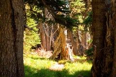 Sunlit деревья в лесе Стоковые Изображения RF