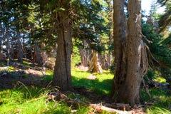 Sunlit деревья в лесе Стоковое фото RF