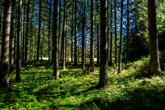 Sunlit лес в Австрии Стоковые Фото