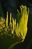 Sunlit лист Стоковое Фото