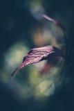 Sunlit лист Стоковое Изображение