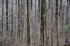 Sunlit кружевной зимний лес Стоковые Фото