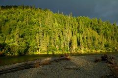 Sunlit лес рекой горы Стоковые Фотографии RF