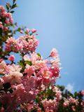 Sunlit покрывает свежие листья стоковые фотографии rf