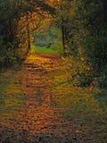 Sunlit путь пущи Стоковое фото RF