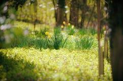 Sunlit древесина в предыдущей весне стоковые фотографии rf