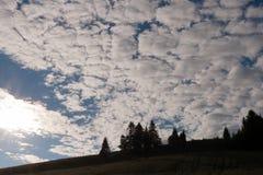 Sunlit силуэты елей на горном склоне и пышном clou Стоковые Изображения