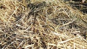Sunlit стог сена Стоковые Фотографии RF