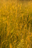 sunlit трава в луге лета Стоковые Фотографии RF