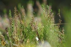 Sunlit трава 2 Стоковая Фотография RF