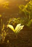 Sunlit цветок Стоковая Фотография