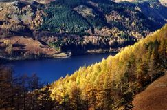 Sunlit Autumn Larches, Thirlmere Stock Photos