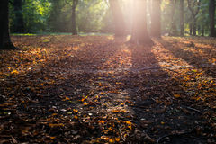 Sunlit autumn leafes. Selective focus Royalty Free Stock Photography