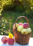 Sunlit basket royalty free stock photos
