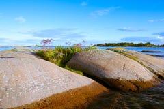 Sunlit beautiful islet in the archipelago. Beautiful islet in the archipelago with plants and flowers Stock Image
