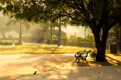 Sunlit bench early morning Stock Images