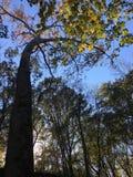 Sunlit Blätter lizenzfreie stockbilder