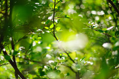 Sunlit branches Royalty Free Stock Image