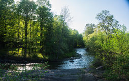 Sunlit brook winding through woods Royalty Free Stock Images
