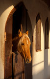 Sunlit Brown Horse in the Stable Looking Out of the Window Stock Image