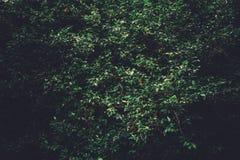 Sunlit bushes