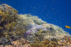 Sunlit coral reef in the Red Sea Stock Photography