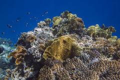 Sunlit coral reef in the Red Sea Stock Photo