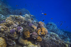 Sunlit coral reef in the Red Sea. Marsa Alam, Egypt Royalty Free Stock Images
