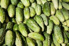 Sunlit cucumbers Stock Photography
