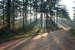 Sunlit dirt road Royalty Free Stock Image