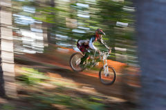 Sunlit Downhill Mountain Biker. A male downhill Mountain Biker goes down the hill amongst the trees royalty free stock image