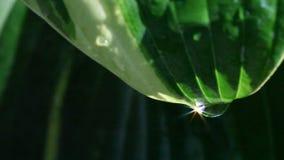 Sunlit drop of water on leaf stock footage