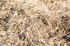 Sunlit dry straw haystack Royalty Free Stock Images