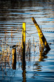 Sunlit fence posts in flood water Stock Photo
