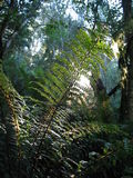 Sunlit Fern Stock Photos