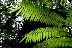 Sunlit fern green leaves and shadows in tropical forest. Royalty Free Stock Photography