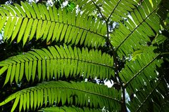 Sunlit fern green leaves and shadows in tropical forest. Stock Images