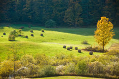 Sunlit field in autumn Royalty Free Stock Photo