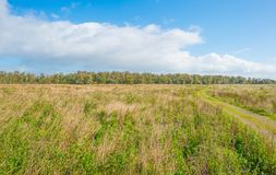 Sunlit field with plants below a blue cloudy sky. In autumn Royalty Free Stock Photos