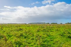 Sunlit field with plants below a blue cloudy sky. In autumn Stock Image
