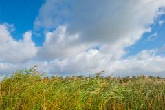 Sunlit field with plants below a blue cloudy sky. In autumn Royalty Free Stock Images