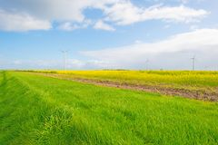 Sunlit field with yellow rapeseed below a blue cloudy sky. At fall Royalty Free Stock Image