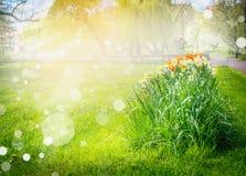 Sunlit flower bed, blurred natural landscape, bokeh Stock Photo