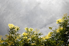 Sunlit flowers in a gray sky Royalty Free Stock Photo