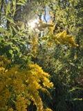 Sunlit flowers stock photos