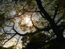 Sunlit Foliage Royalty Free Stock Photo